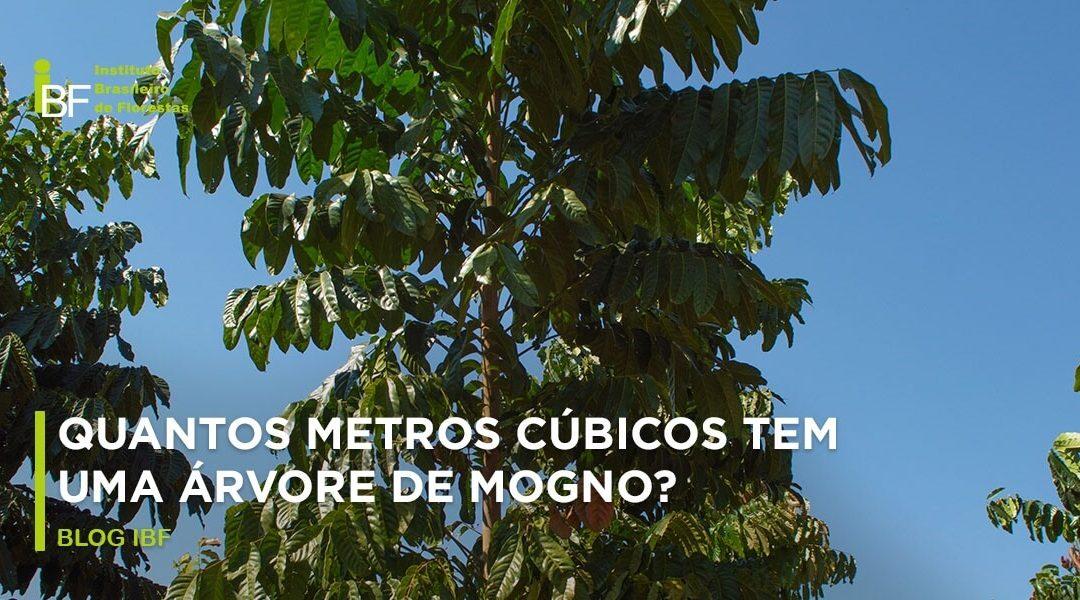 Quantos metros cúbicos tem uma árvore de mogno