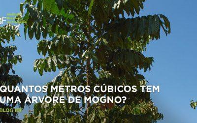 Quantos metros cúbicos tem uma árvore de mogno?