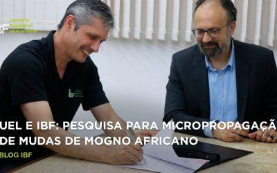 IBF firma convênio com Laboratório da UEL para pesquisar o mogno africano