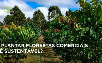 Plantar florestas comerciais é sustentável?