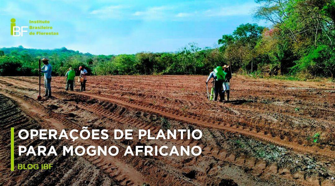 Como plantar mogno africano: dicas e métodos