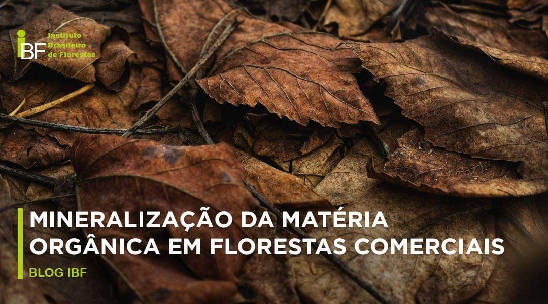 Mineralização da matéria orgânica em florestas comerciais