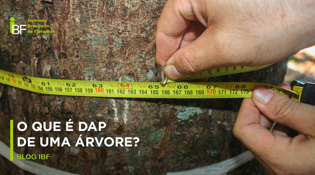 O que é DAP de uma árvore?