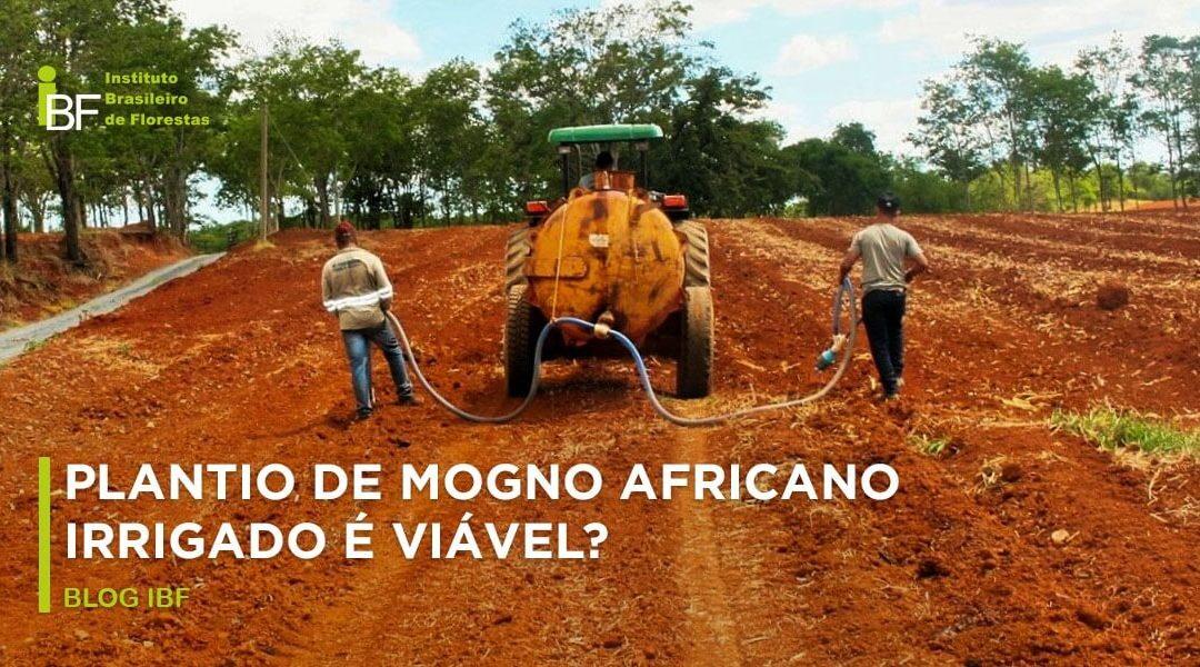 Plantio irrigado de mogno africano: quando e como fazer