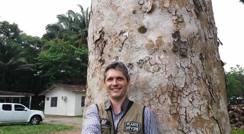 Árvore de mogno africano com mais de 40 anos de idade na Embrapa Pará com Solano Aquino