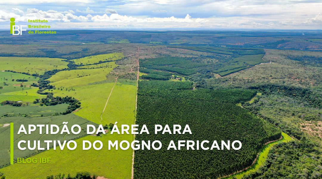 Aptidão da área para cultivo do mogno africano
