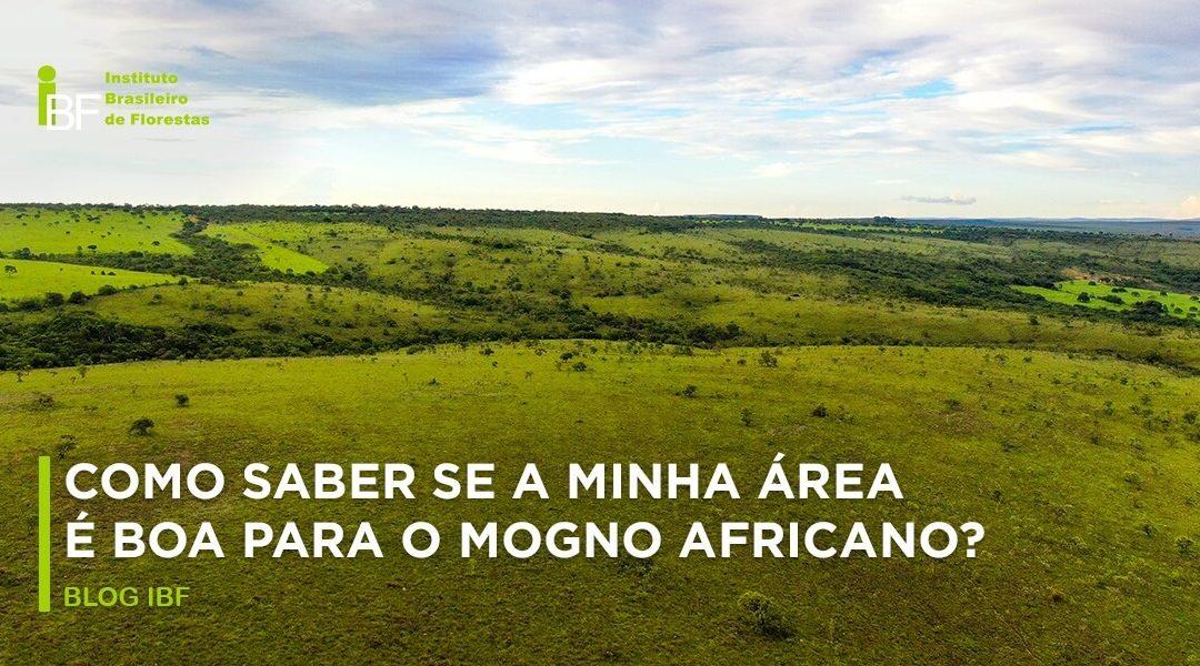 Como saber se a minha área é boa para o mogno africano?