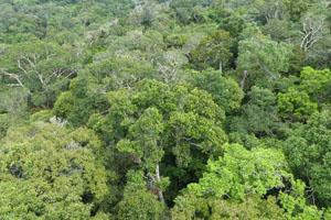 vegetação da Amazônia